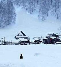 在冬季,牛皮癣加重的因素
